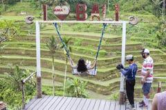 Jovem mulher no balanço na selva tropical perto dos terraços do arroz de Tegallalang em Bali, Indonésia foto de stock royalty free