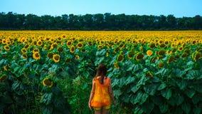 Jovem mulher no campo grande dos girassóis Fotografia de Stock Royalty Free