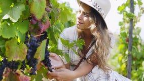 A jovem mulher prova uvas da planta de videira filme
