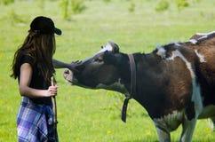 Jovem mulher que afaga uma vaca foto de stock