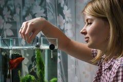 Jovem mulher que alimenta beta peixes no aquário em casa foto de stock royalty free