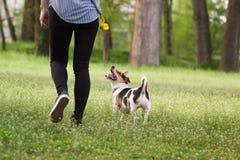 Jovem mulher que anda com um cão que joga o treinamento Fotos de Stock