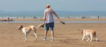 Jovem mulher que anda dois cães praia no agosto de 2018 fotografia de stock royalty free