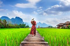 Jovem mulher que anda no trajeto de madeira com campo verde do arroz em Vang Vieng, Laos foto de stock royalty free