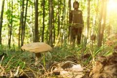 Jovem mulher que aprecia a natureza na floresta ensolarada que recolhe cogumelos imagens de stock