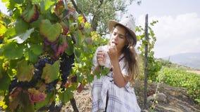 Jovem mulher que escolhe uvas na planta de videira vídeos de arquivo