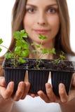Jovem mulher que guarda a planta, broto do aipo Foto de Stock