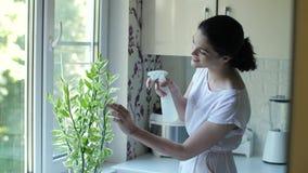 Jovem mulher que importa-se com o houseplant video estoque