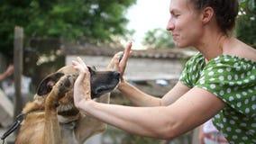 Jovem mulher que joga com o cão em uma trela O cão exulta-lhe e puxa- para cima suas patas para, saltos vídeos de arquivo