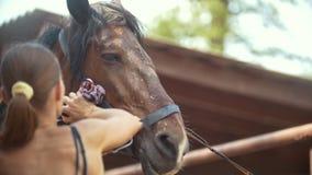 Jovem mulher que limpa um cavalo com água em um dia ensolarado na exploração agrícola animal ascendente próximo do focinho video estoque