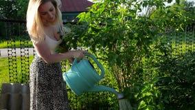 Jovem mulher que molha um jardim do verão Threes verdes na vila, cuidado para a natureza filme