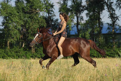 Jovem mulher que monta o cavalo de Trakehner Fotos de Stock