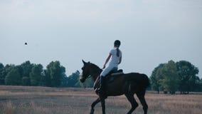 Jovem mulher que monta um cavalo no campo Uma menina monta um cavalo video estoque