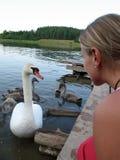 Jovem mulher que olha a cisne branca imagens de stock