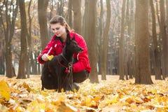 Jovem mulher que penteia um cão no colar vermelho Imagem de Stock Royalty Free