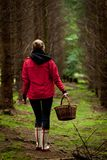 Jovem mulher que recolhe cogumelos na floresta fotografia de stock royalty free