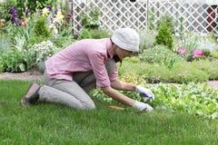 Jovem mulher que trabalha na cama do jardim Imagens de Stock