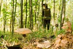 A jovem mulher recolhe cogumelos na manhã ensolarada morna da floresta Imagem de Stock