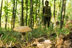 A jovem mulher recolhe cogumelos na manhã ensolarada morna da floresta Imagens de Stock
