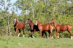Jovem quatro no prado do verão Fotos de Stock Royalty Free