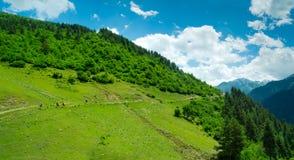 Jovens mulheres que trekking em Svaneti, Imagem de Stock