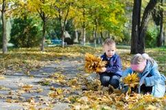 Jovens que coletam as folhas de outono Imagens de Stock Royalty Free