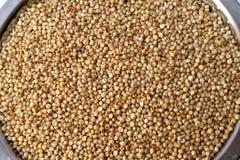 Jowar/granuli del sorgo Fotografie Stock