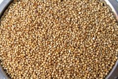 Jowar/Sorghum Grains Stock Photos