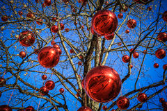 Joy of Christmas. Red Christmas ornaments hang from a tree with blue sky in the background Stock Photo