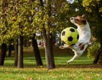 Joy with domestic pet dog at autumn park and ball Stock Images