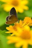 Joy of garden (butterfly) Stock Images