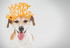 Joy happy laughing pet. Stock Images