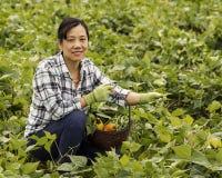 Joy of harvesting vegetables