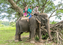 Joy Ride On Elephant Royalty-vrije Stock Foto