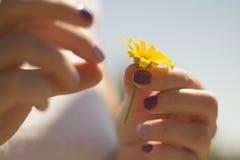 Joy Spring blomning royaltyfri bild