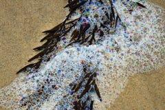 Joyas del mar Fotografía de archivo libre de regalías