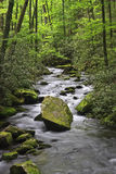 Joyce Kilmer Forest Stream Stock Photography