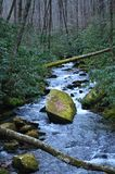 Joyce Kilmer National Park-Strom Lizenzfreie Stockfotografie