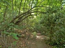 Joyce Kilmer Pamiątkowy Lasowy Wycieczkuje ślad Fotografia Stock