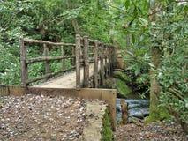 Joyce Kilmer stopy Pamiątkowy Lasowy Drewniany most Fotografia Stock