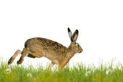 Joyeuses Pâques ; lapin de Pâques image stock
