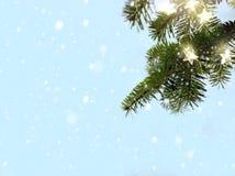 Joyeux Noël - branches d'arbre de neige et de sapin avec la lumière de vacances photographie stock