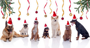 Joyeux Noël et concept heureux d'année d'actualités de chiens Image libre de droits