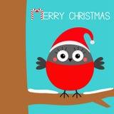 Joyeux Noël Oiseau rouge de plume d'hiver de bouvreuil se reposant sur la branche d'arbre Santa Hat Canne de sucrerie Carte de vo illustration libre de droits