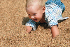 Joyful blond toddler lying on the wheat grains. Joyful blonde babe in a plaid shirt and jeans crawling on wheat grain Stock Photography