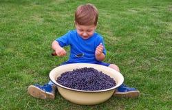 Joyful boy sitting on green grass and eating blueberries Stock Photos