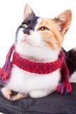 Joyful Calico Cat Royalty Free Stock Photography