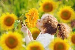 Joyful child smell sunflower in summer sunny day. Stock Images