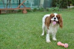 Joyful dog playing Stock Photo
