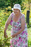 Joyful elderly woman gardening, looking at camera Royalty Free Stock Images